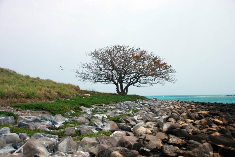 O arquipélago de Abrolhos abriga a maior formação de corais do Atlântico Sul