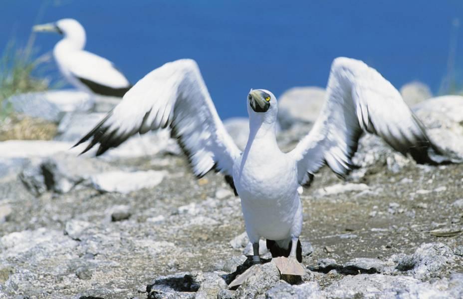 Aves no Parque Nacional Marinho de Abrolhos