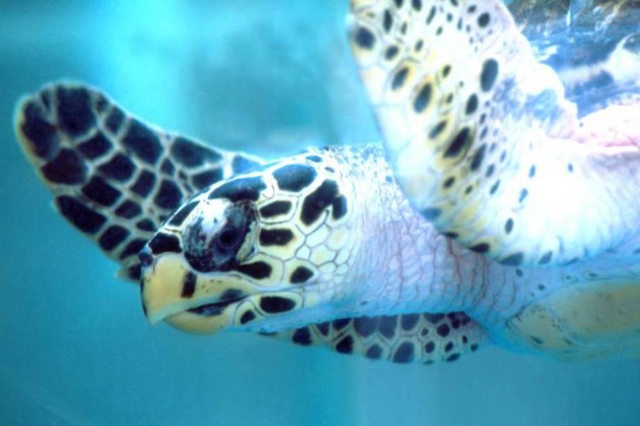 Projeto Tamar é um dos programas de proteção de espécies de maior sucesso no Brasil