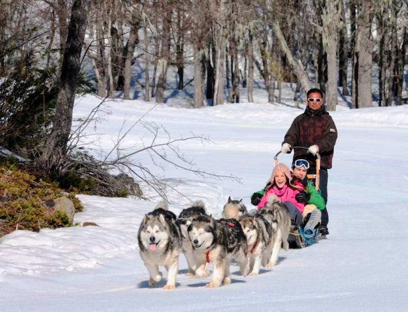 O trenó puxado por cães é uma atividade divertida para toda a família