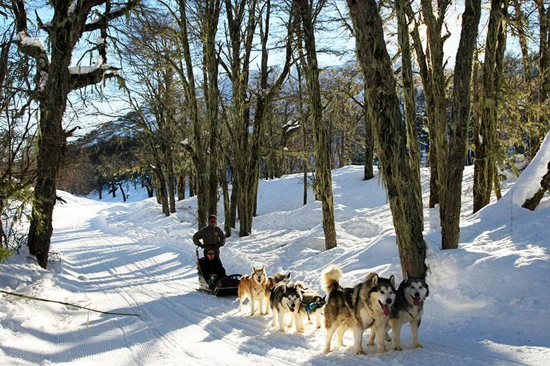 Trenós puxados por cães em Chillán