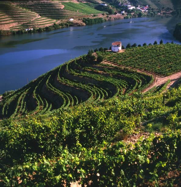 Na região montanhosa do Douro, as uvas são vindimadas e fermentadas para a produção do famoso Vinho do Porto