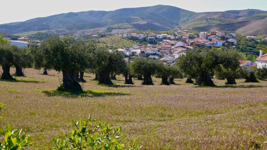 Oliveiras na região do Alto Douro