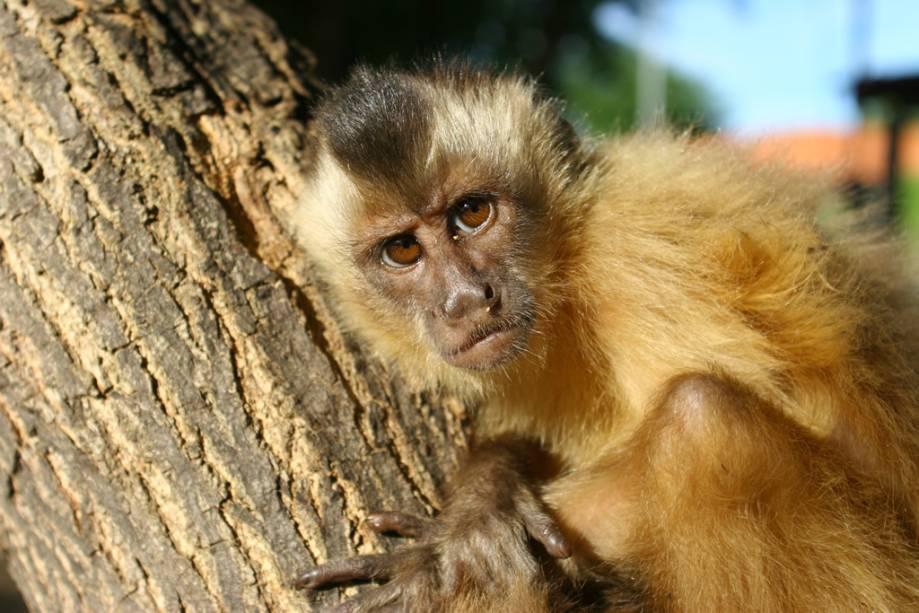 Os simpáticos macacos da região costumam atrair comida dos turistas
