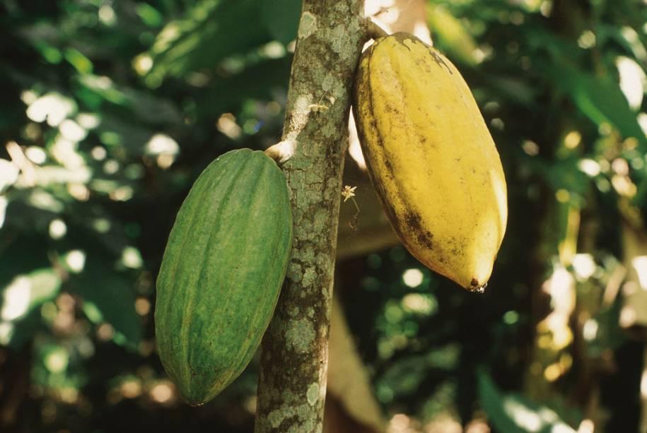 As fazendas podem ser visitadas na importante região produtora de cacau da Bahia, Itabuna, a 32 km de Ilhéus
