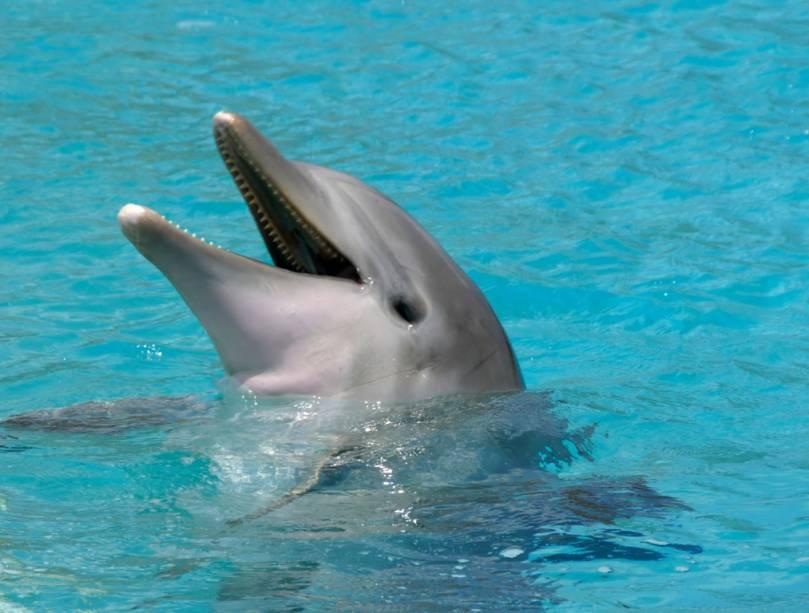 """É possível participar de atividades com golfinhos nos EUA""""http://viajeaqui.abril.com.br/paises/bahamas"""" rel =""""Bahamas"""" Meta =""""_vazio""""> Bahamas"""" class=""""lazyload"""" data-pin-nopin=""""true""""/></div> <p class="""