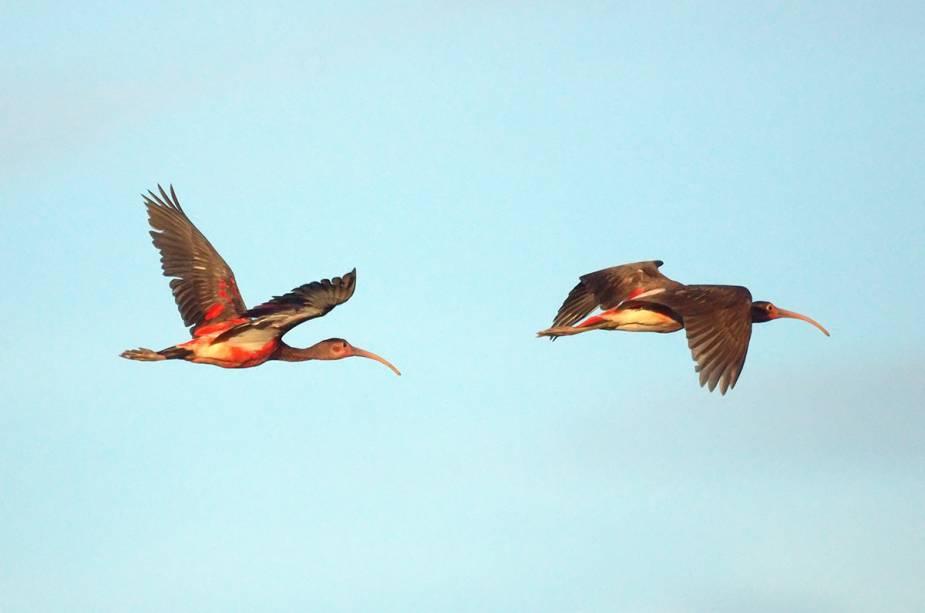 Observação de pássaros em Trinidad