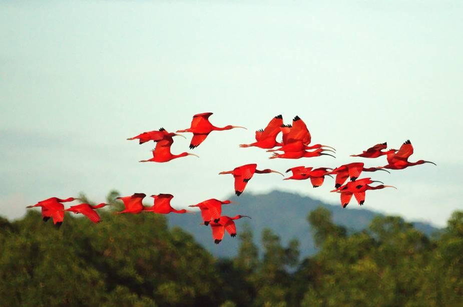 A observação de pássaros é uma atividade comum na ilha de Trinidad