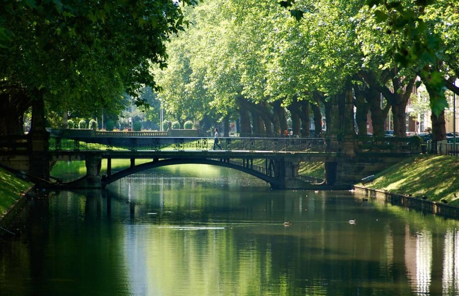 Nas margens do Reno, as árvores de Düsseldorf são irresistíveis para um clique de verão