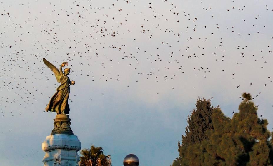 """""""Eu vi esse pássaro voando nos Albert Gardens enquanto caminhava pela Promenade des Anglais em Nice, França."""