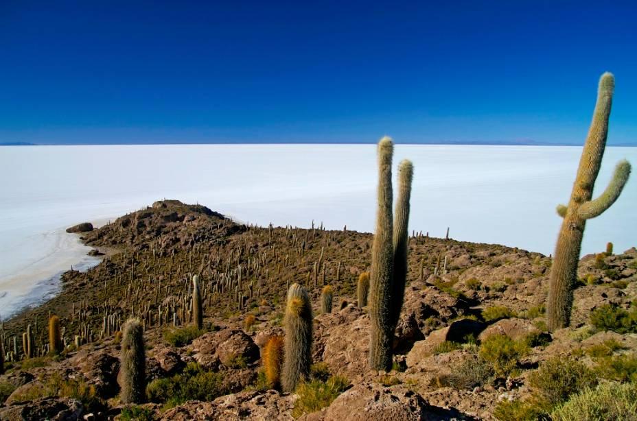 Isla del Pescado ou de los Pescadores é uma colina acima do Salar de Uyuni.  Uma de suas principais características são os pés de cactos gigantes, que podem atingir alturas de mais de 10 metros.