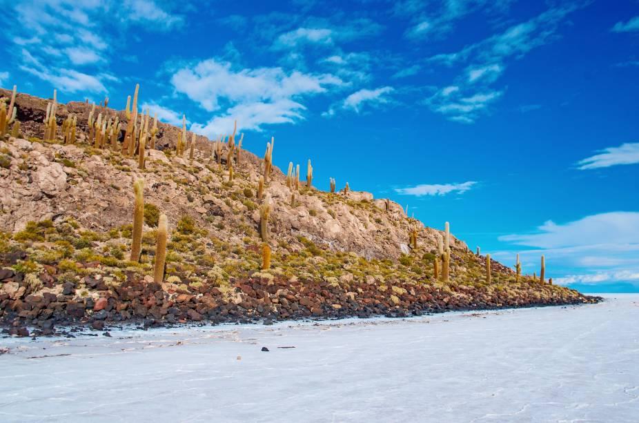 A ilha de Incahuasi no Salar de Uyuni é povoada por cactos centenários, cujas espinhas são tão compridas que assobiam ao vento forte