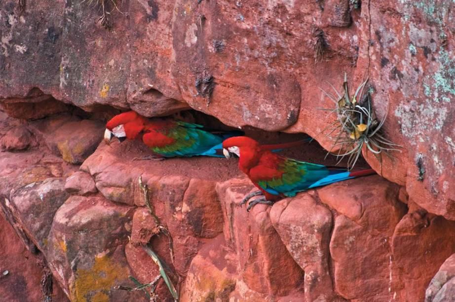 """OU""""http://www.buracodasararas.com.br/pt/"""" Meta =""""_vazio"""" rel =""""Noopener""""> <strong>Buraco das Araras</strong> é outro atrativo de Bonito, onde o turista pode ver as aves emergirem de seus ninhos"""" class=""""lazyload"""" data-pin-nopin=""""true""""/></div> <p class="""