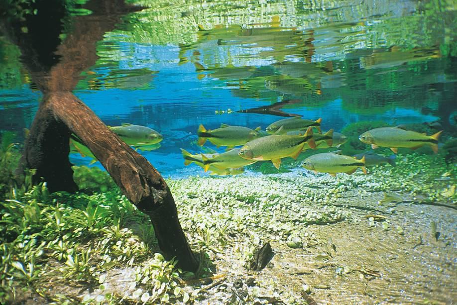 A transparência da água, possibilitada pela alta concentração de cálcio, substância a ser vertida, impressiona.