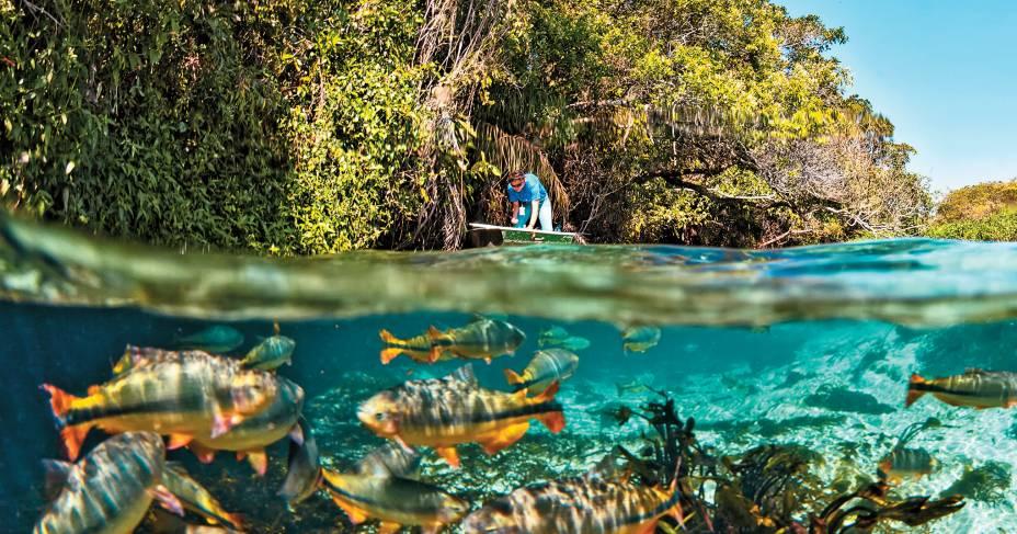 """O aquário natural de""""http://riosucuri.com.br/"""" Meta =""""_vazio"""" rel =""""Noopener""""> <strong>Rio Sucuri</strong> em bonito"""" class=""""lazyload"""" data-pin-nopin=""""true""""/></div> <p class="""
