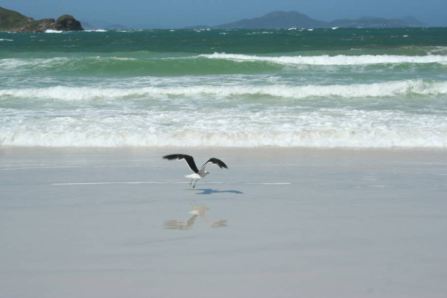 Gaivota na praia do Pontal