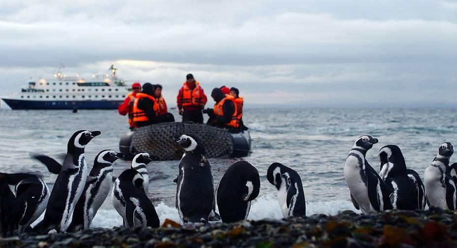 Foto de uma visita à ilha de Magdalena, berço dos pinguins de Magalhães, uma das paradas do cruzeiro de Ushuaia a Punta Arenas em território chileno, operado pela Cruceros Australis. A viagem atravessa o Cabo Horn, ponto de encontro entre o Atlântico e o Pacífico.