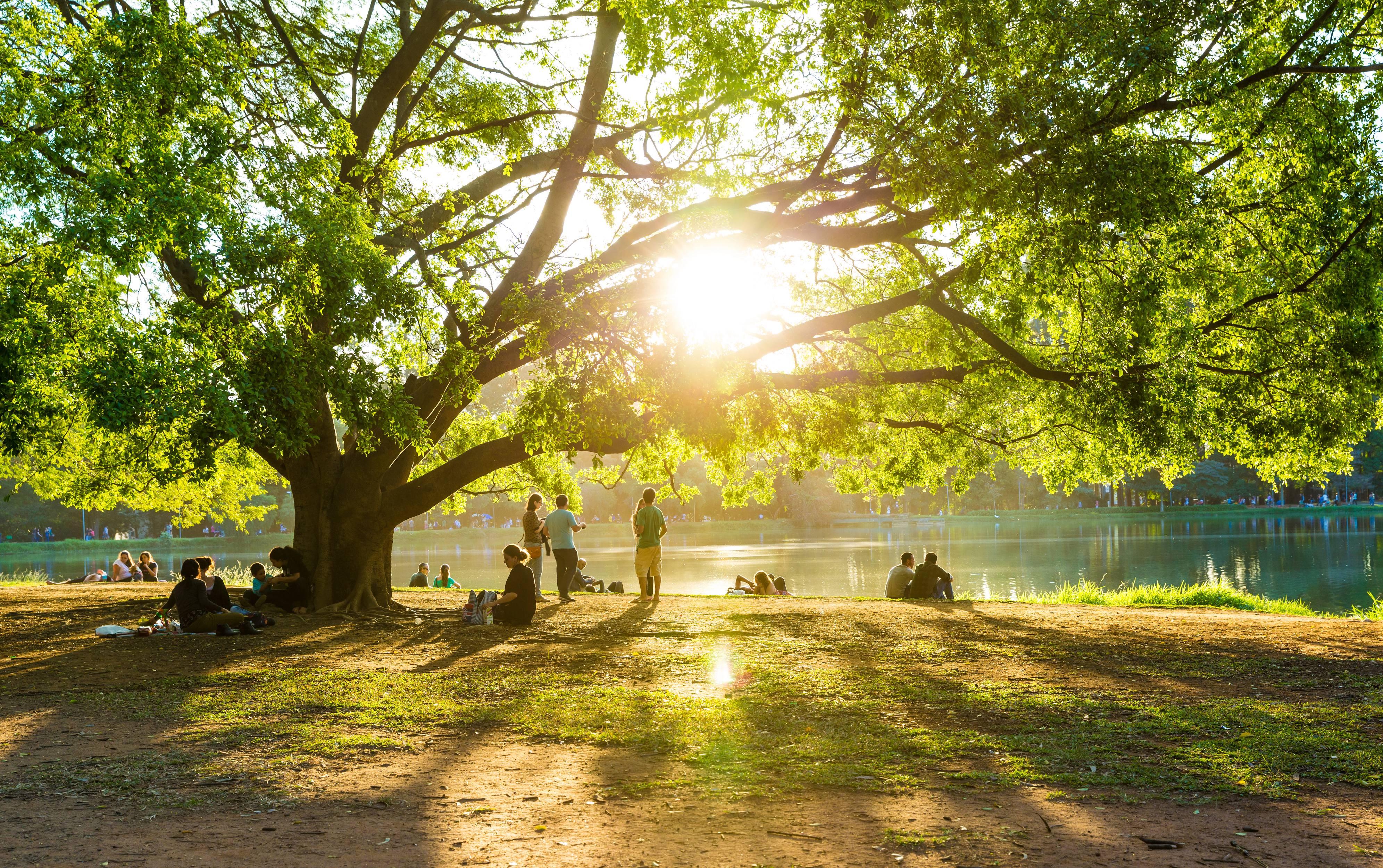 Pessoas estão descansando na grama sob a árvore na tarde ensolarada no lago artificial do Parque do Ibirapuera em São Paulo, Brasil