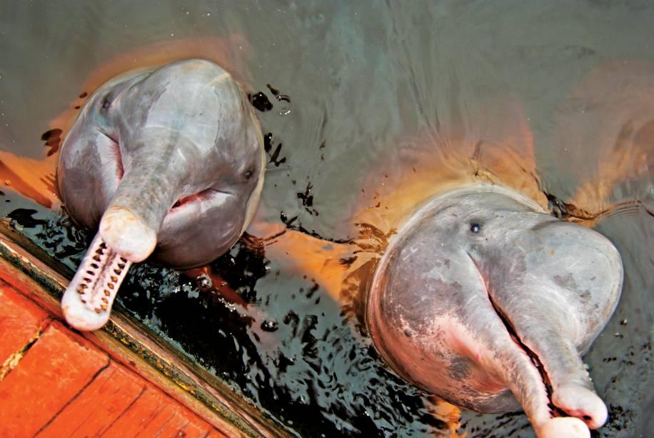 Golfinhos do Rio Negro em Manaus, Amazônia