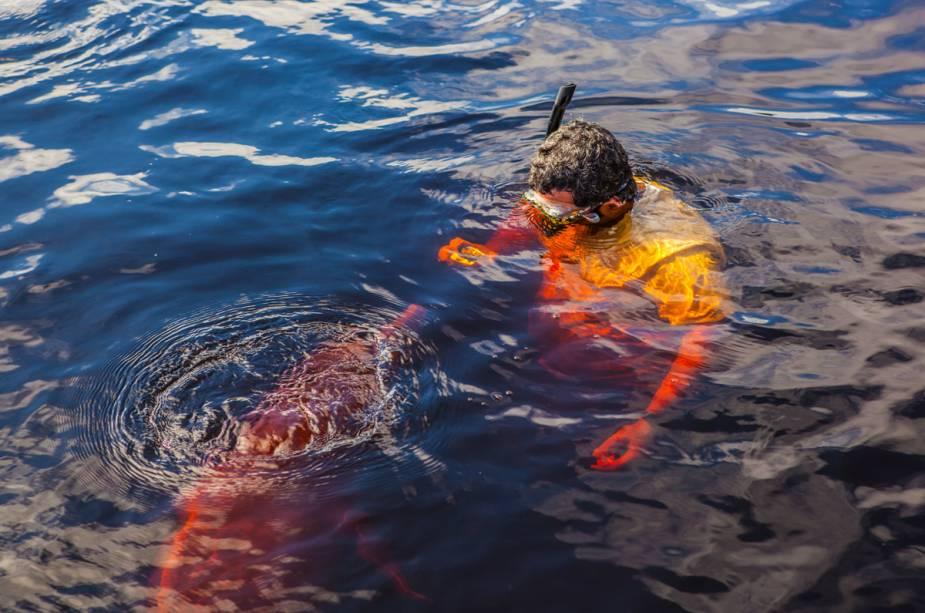 O golfinho mora na Amazônia e faz parte do nosso folclore