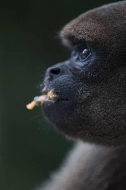 """Floresta dos Macacos, centro de reabilitação de primatas administrado pela Fundação Floresta Viva no bairro hoteleiro""""http://viajeaqui.abril.com.br/estabelecimentos/br-am-manaus-hospedagem-amazon-ecopark-lodge"""" rel =""""Amazon Ecopark Jungle Lodge"""" Objetivo =""""_vazio""""><noscript><img data- src="""