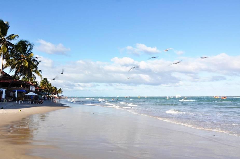 Passarinhos passeiam na Praia do Francês próximo a Maceió (AL)