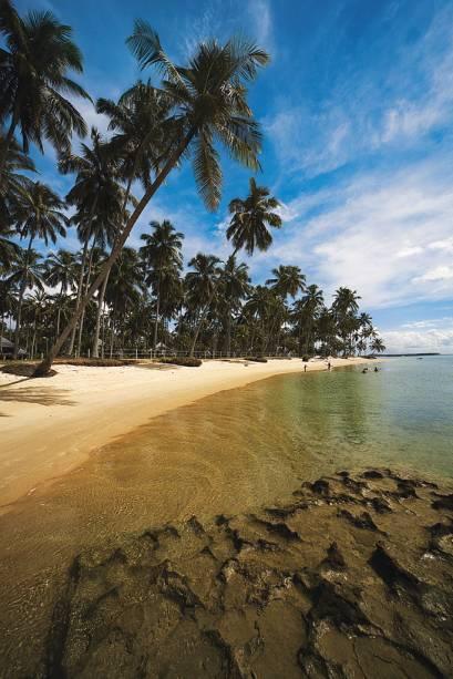 Os coqueiros da Praia dos Carneiros enriquecem a paisagem e dão uma boa sombra na areia clara
