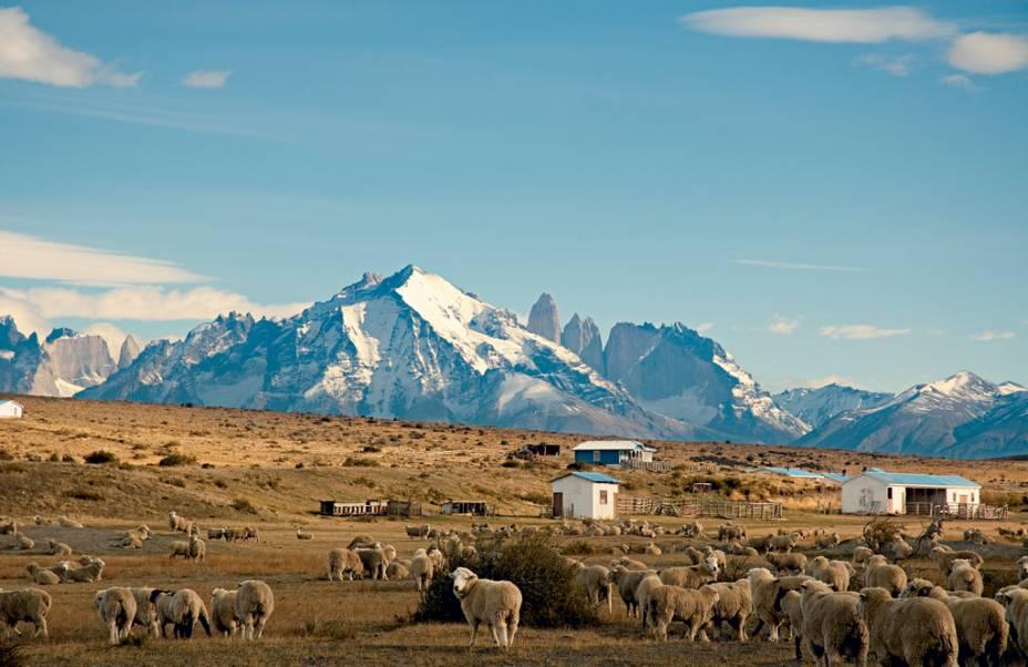 Vigilância de ovelhas que vê Torres del Paine surgir no meio do nada: um sonho de aventura