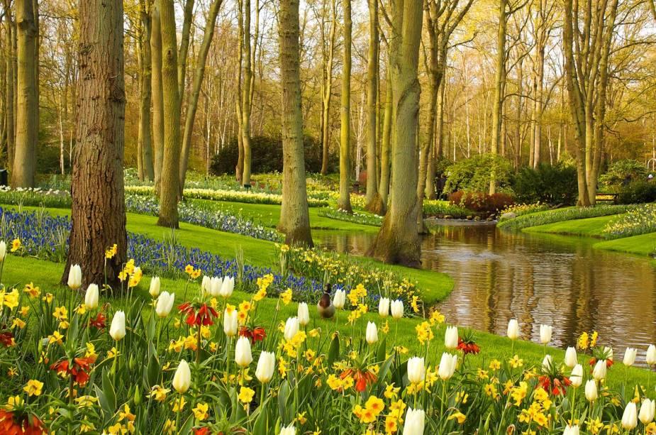 """Na primavera no hemisfério norte, o""""http://viajeaqui.abril.com.br/estabelecimentos/holanda-amsterda-atracao-keukenhof-em-lisse"""" rel =""""Parque Keukenhof"""" Objetivo =""""_vazio""""> O parque Keukenhof está cheio de flores e aberto para visitas guiadas: milhares de pessoas viajam para Amsterdã para ver o enorme jardim"""" class=""""lazyload"""" data-pin-nopin=""""true""""/></div> <p class="""
