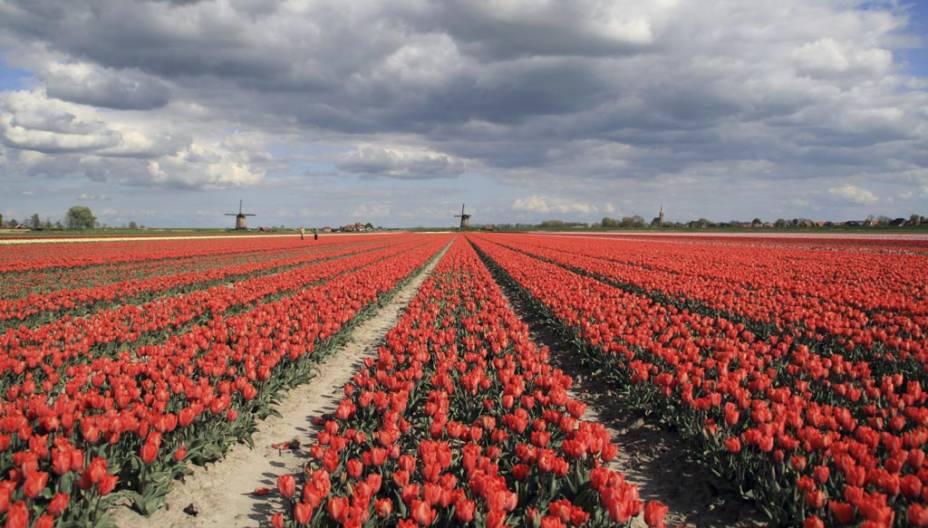 """O parque botânico""""http://viajeaqui.abril.com.br/estabelecimentos/holanda-amsterda-atracao-keukenhof-em-lisse"""" rel =""""Keukenhof"""" Objetivo =""""_vazio""""> Keukenhof revela uma das paixões dos holandeses, as tulipas"""" class=""""lazyload"""" data-pin-nopin=""""true""""/></div> <p class="""