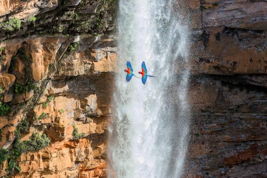Par de araras vermelhas subindo da cachoeira Véu de Noiva, na Chapada dos Guimarães, Mato Grosso