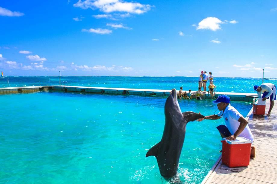Dolphin Island Park em Bávaro, ao norte de Punta Cana