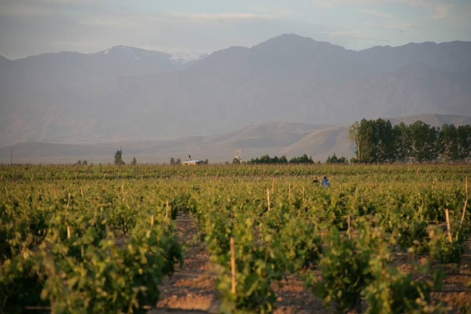 Mendoza produz quase 80% da produção de vinho da Argentina.  A colheita é celebrada com música e desfiles no Festival Nacional da Colheita em março