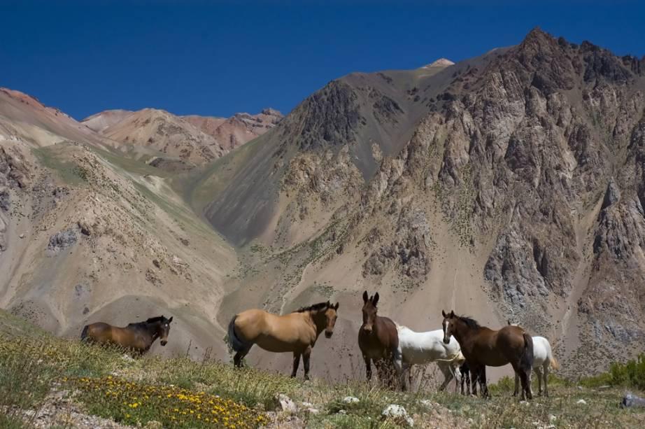 Você pode explorar Mendoza, que fica no sopé da Cordilheira dos Andes, a cavalo como os típicos