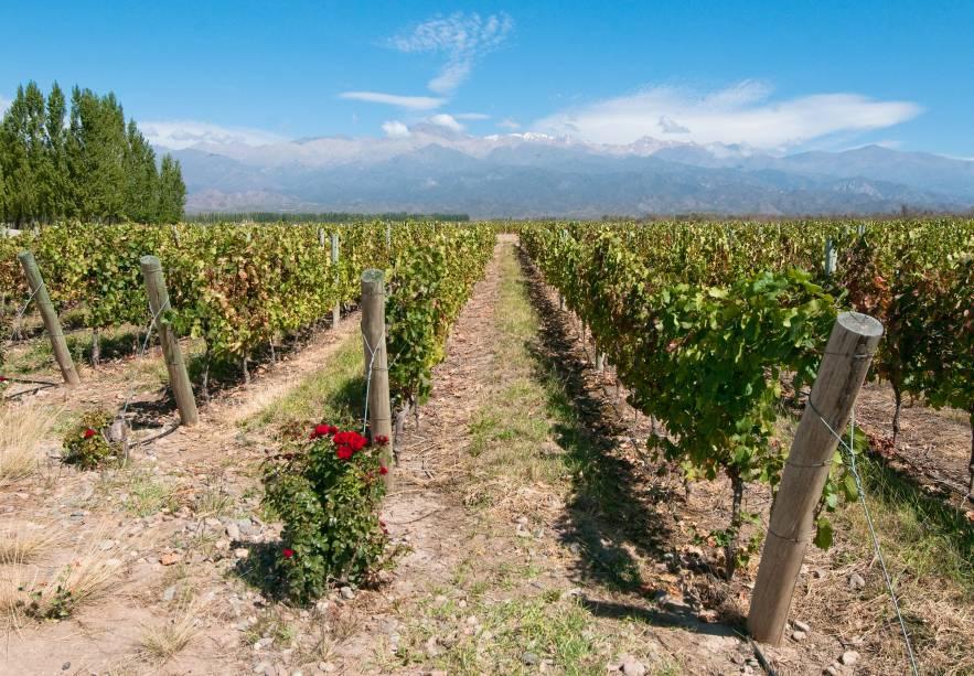 Os vinhedos de Mendoza são o principal atrativo da cidade: são diversos os lugares para passear entre os vinhedos e degustar os bons vinhos argentinos.  A cidade é a região vinícola mais importante do país