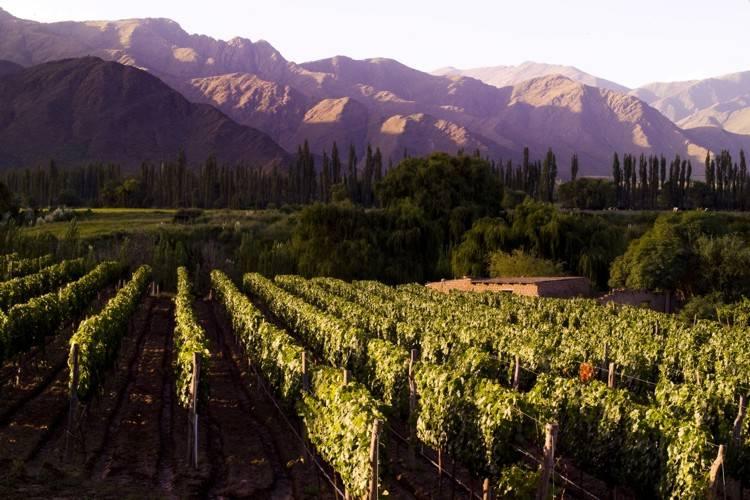 Toda a província de Salta possui extensos vinhedos, muitos dos quais podem ser visitados