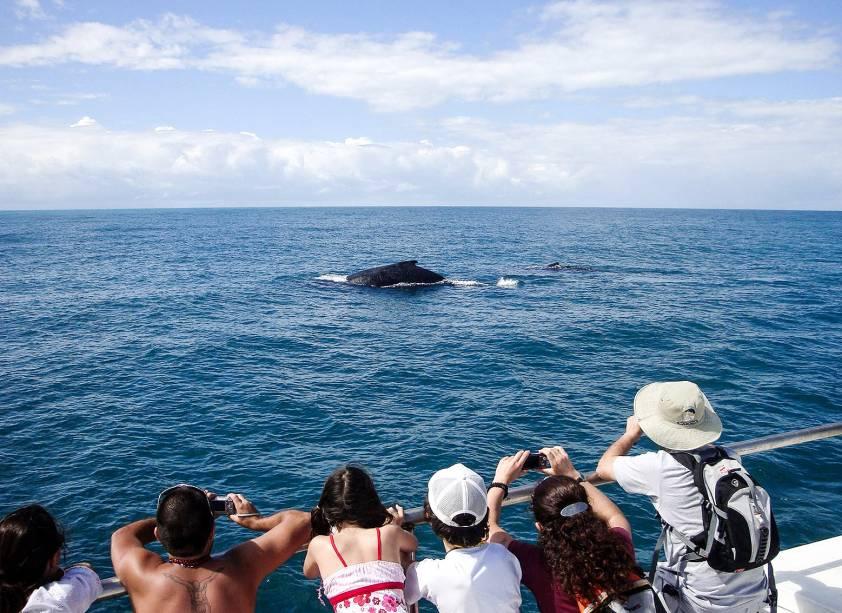 """Entre as visitas está o""""http://viajeaqui.abril.com.br/estabelecimentos/br-ba-porto-seguro-atracao-passeio-de-barco-para-observacao-de-baleias-jubarte"""" rel =""""Olha a baleia jubarte"""" Objetivo =""""_vazio""""> Observação de baleias jubarte"""" class=""""lazyload"""" data-pin-nopin=""""true""""/></div> <p class="""