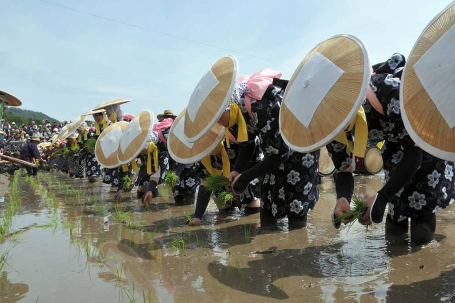 """<strong>Cordas Mibu no Hana</strong> é um ritual para replantar arroz em Hiroshima, <strong>Japão</strong> para que a colheita seja abundante.  No primeiro domingo de junho, os camponeses se reúnem e cantam, acompanhados por tambores, flautas e gongos"""" class=""""lazyload"""" data-pin-nopin=""""true""""/></div> <p class="""