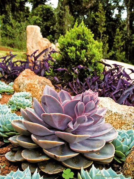 O Jardim dos Pinhais possui oito projetos ornamentais com espécies botânicas de diversos países.  O ingresso dá direito a uma visita guiada