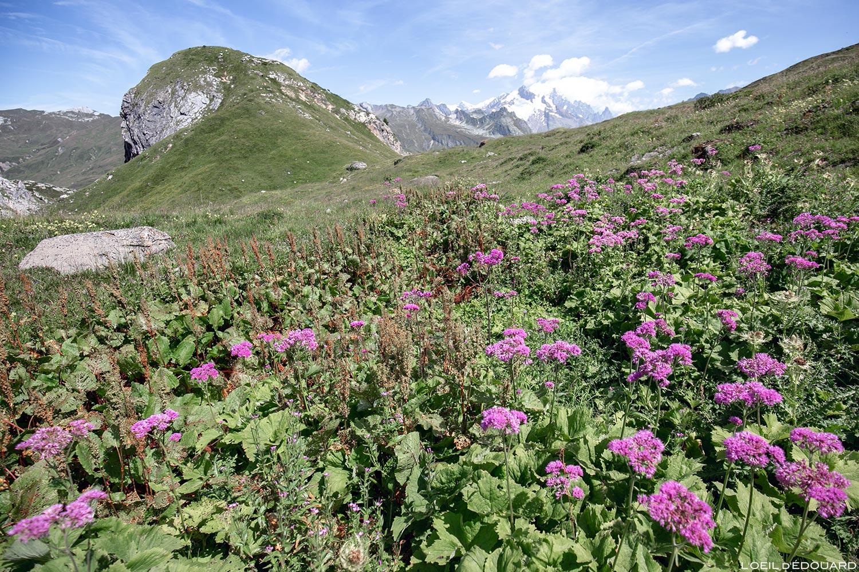 Beaufortain trek 2 Passeur Pralognan 1 blog outdoor Trace les Cimes