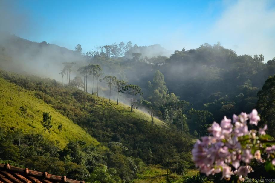 Montanhas e araucárias em uma paisagem típica da Serra da Mantiqueira em Santo Antônio do Pinhal