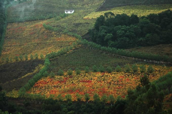 vale dos vinhedos foto fabiano mazzotti prefeitura municipal