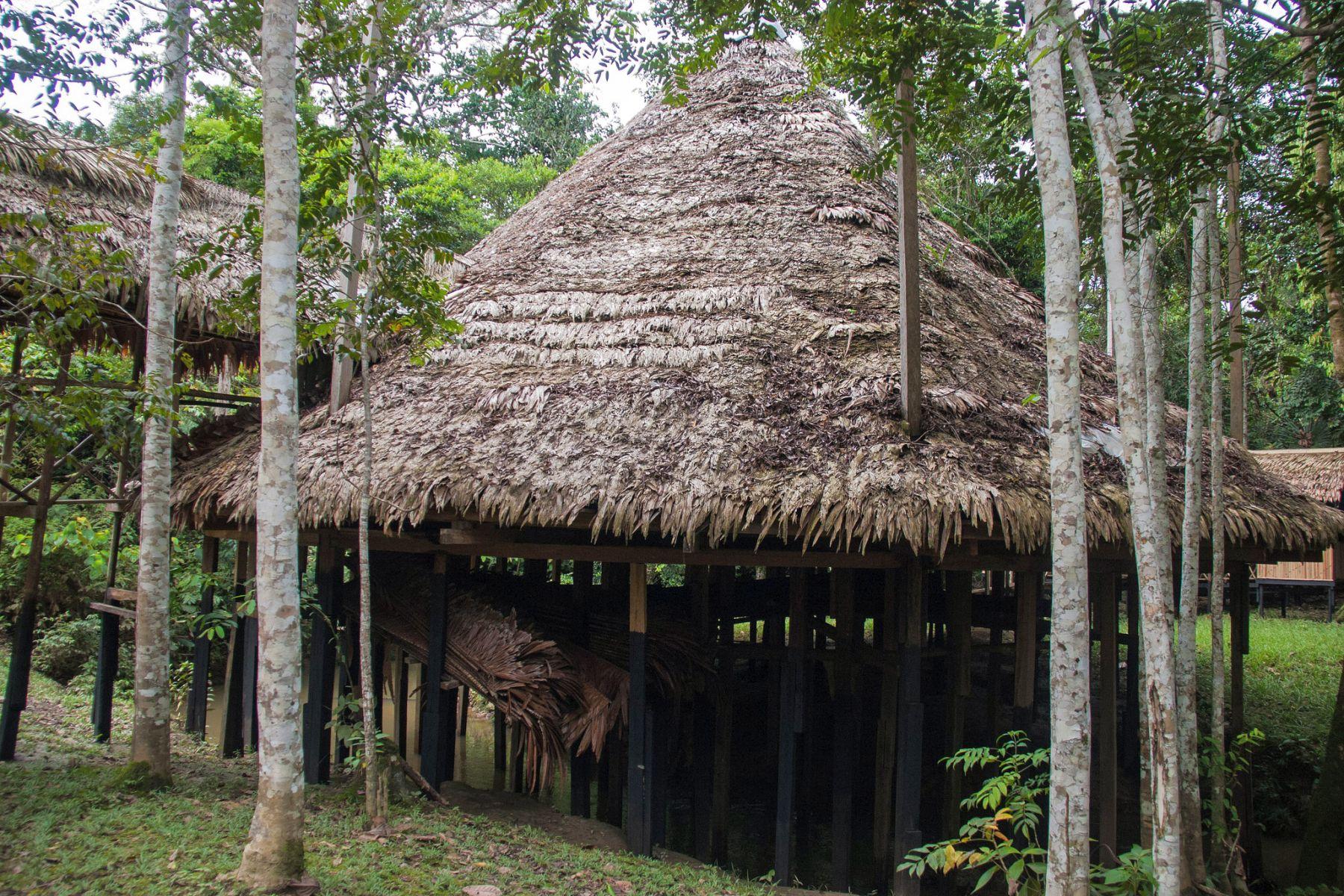 Ayahuasca 1