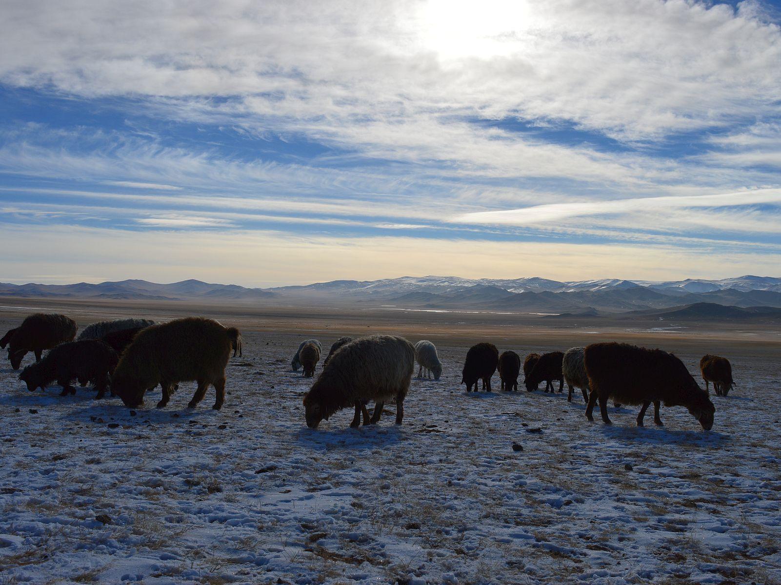 Uma viagem de onibus da Mongolia para lembrar
