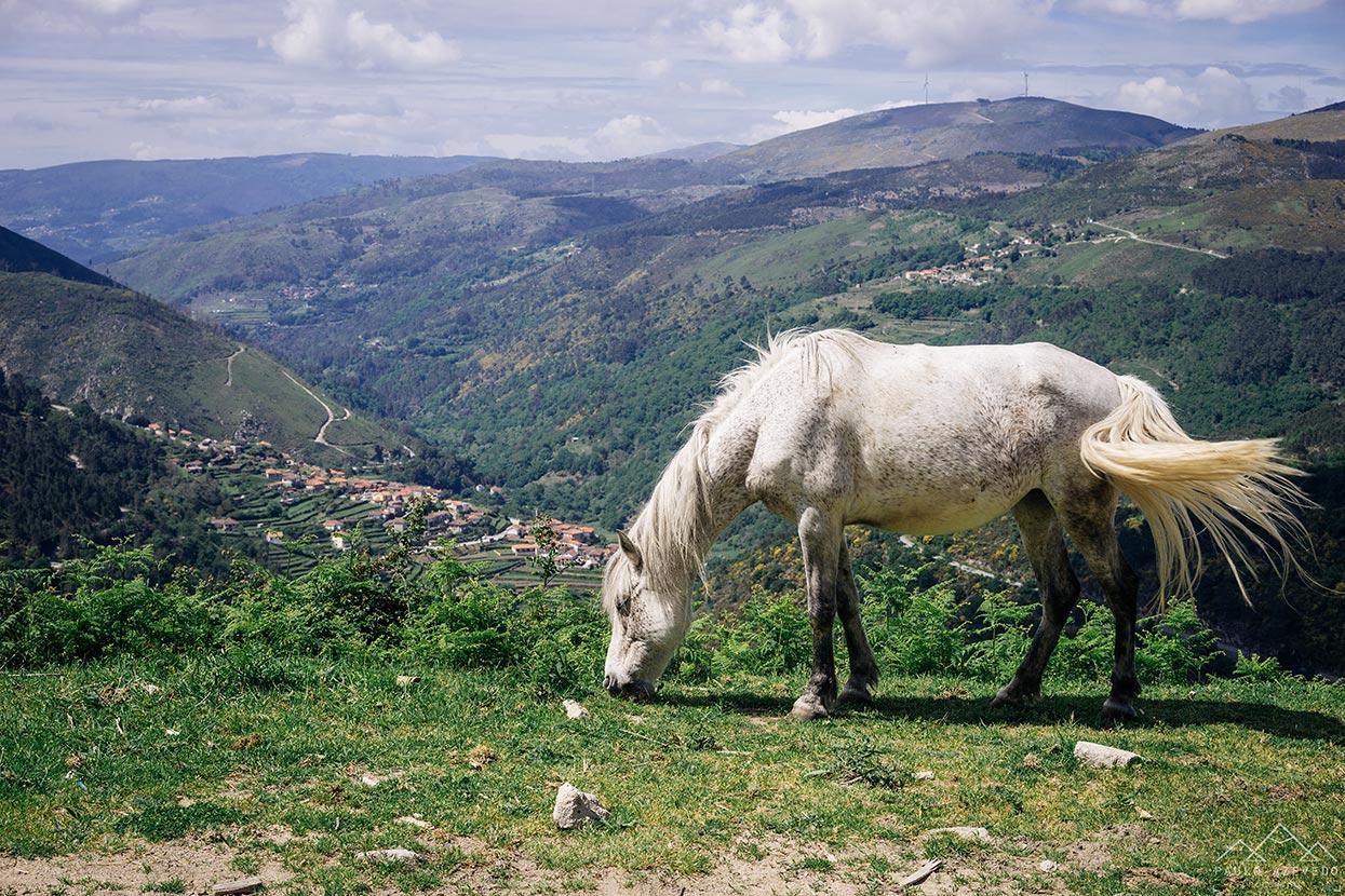 Cavalo com Sistelo ao fundo